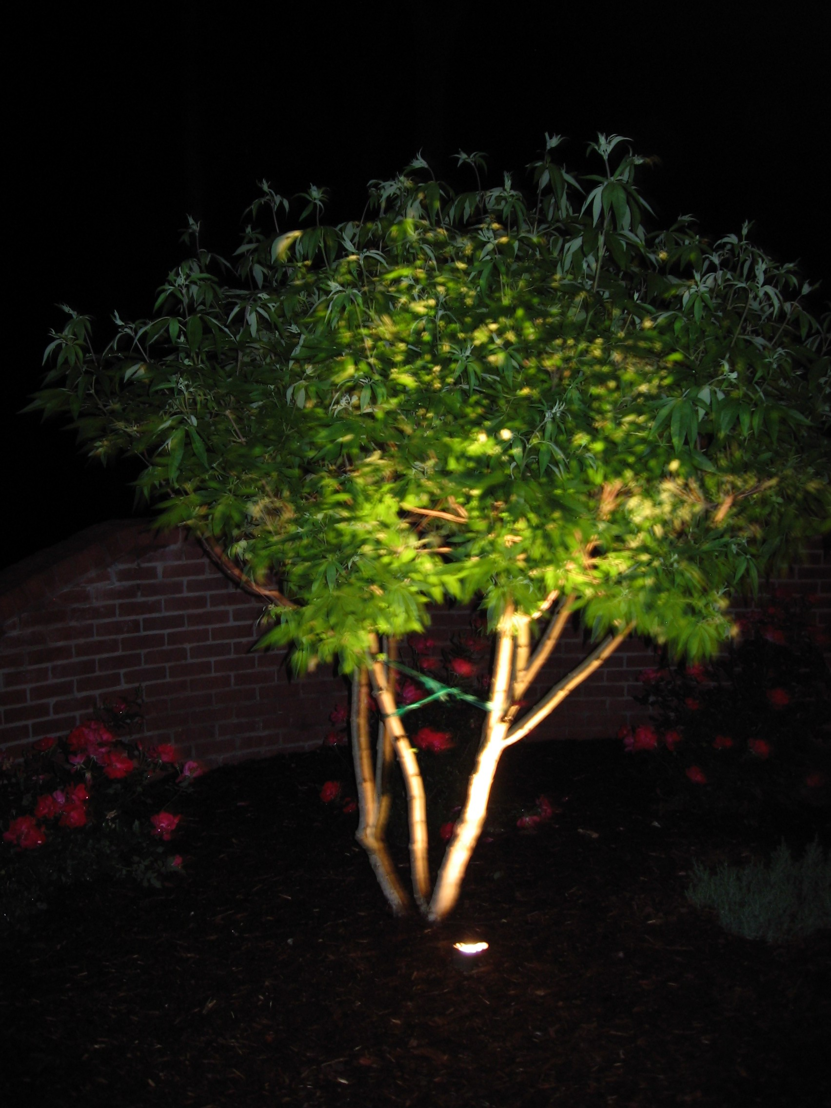 Uplight trees landscape services for Outdoor lighting uplight