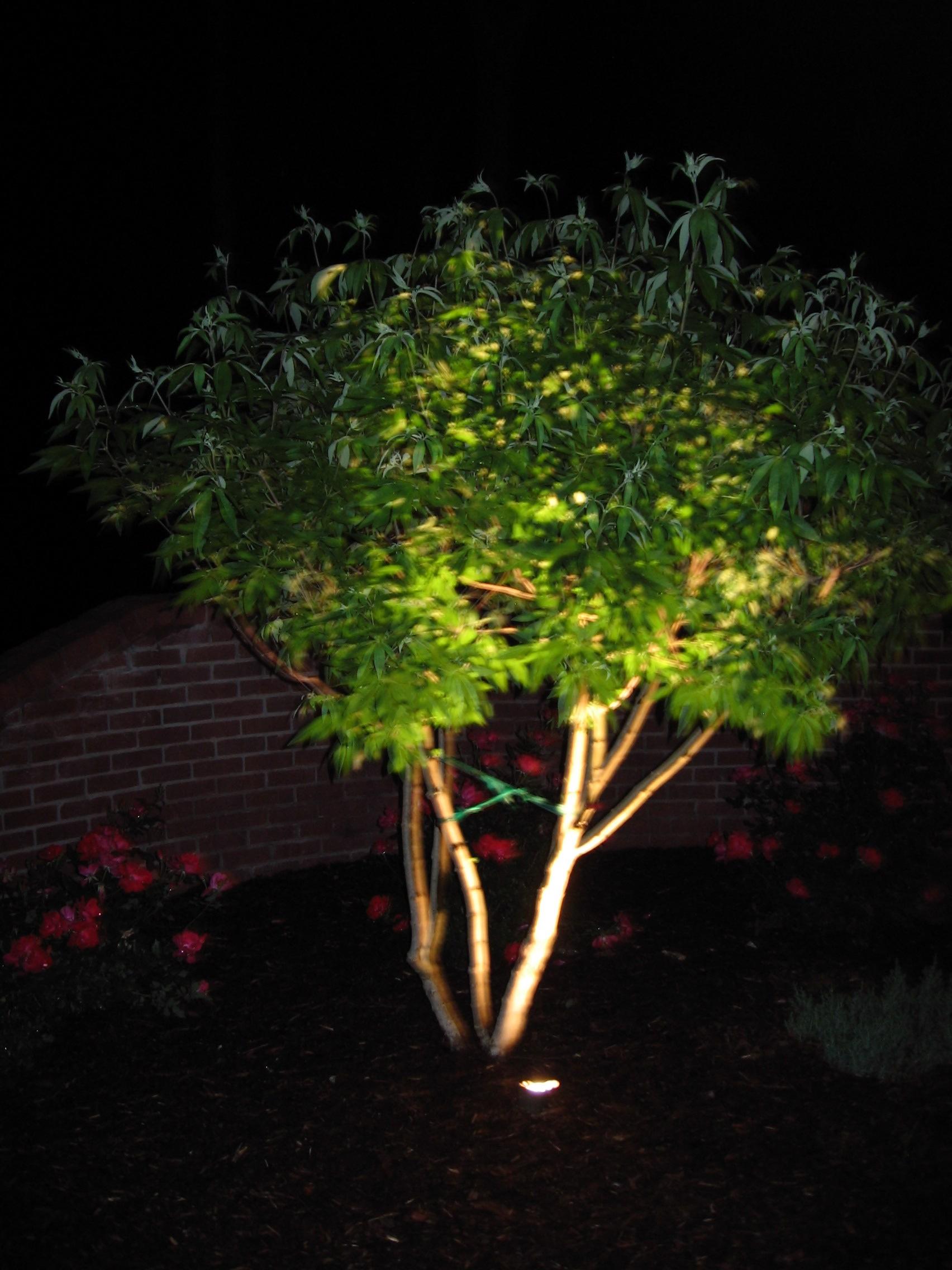 Uplight Trees Landscape Services